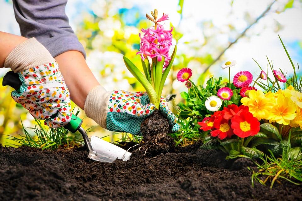 Spiritual Gardens: Plants & Herbs